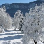 Winter 2012c