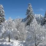 Winter 2012d